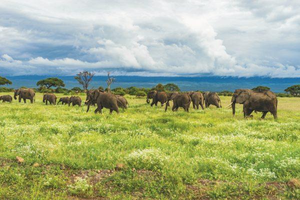 Кенія слони