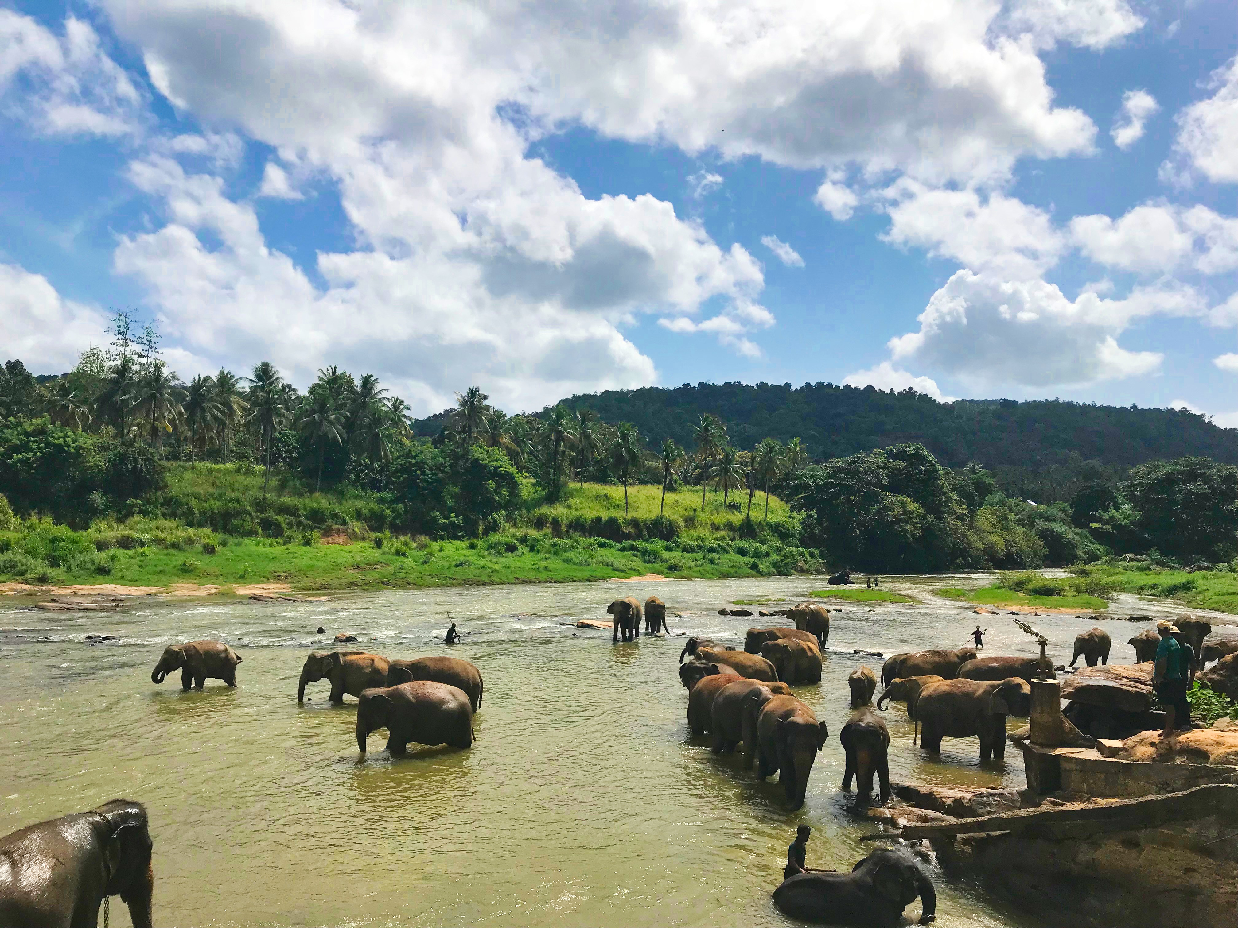 слони в річці