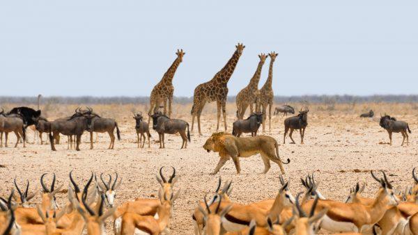 тварини в національному парку в намібії