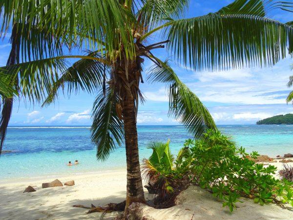 Сейшели пляж пальма