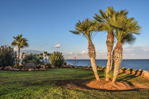 Кіпр пальми