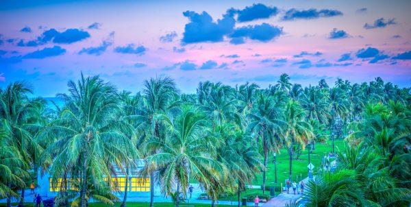 пальми у маямі