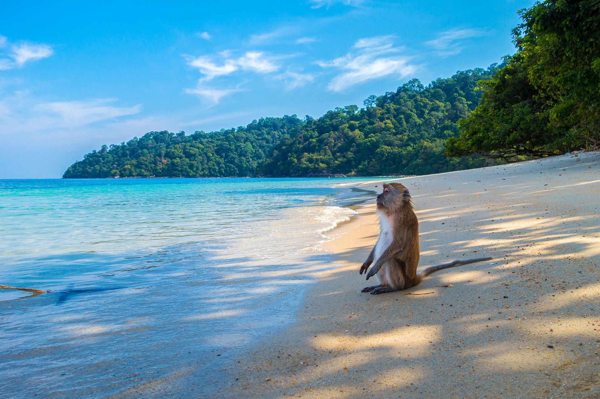 тайланд мавпа на пляжі