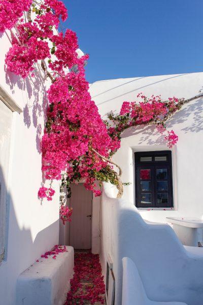 міконос вулиця з квітами