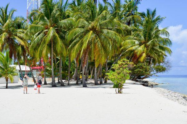 мальдіви баа пальми на пляжі