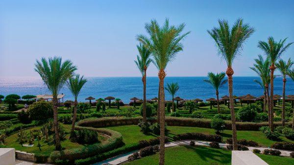 Єгипет пальми море