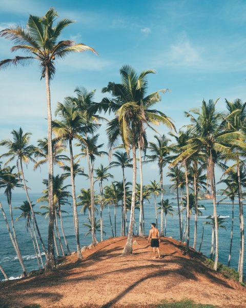 шрі-ланка острів пальми