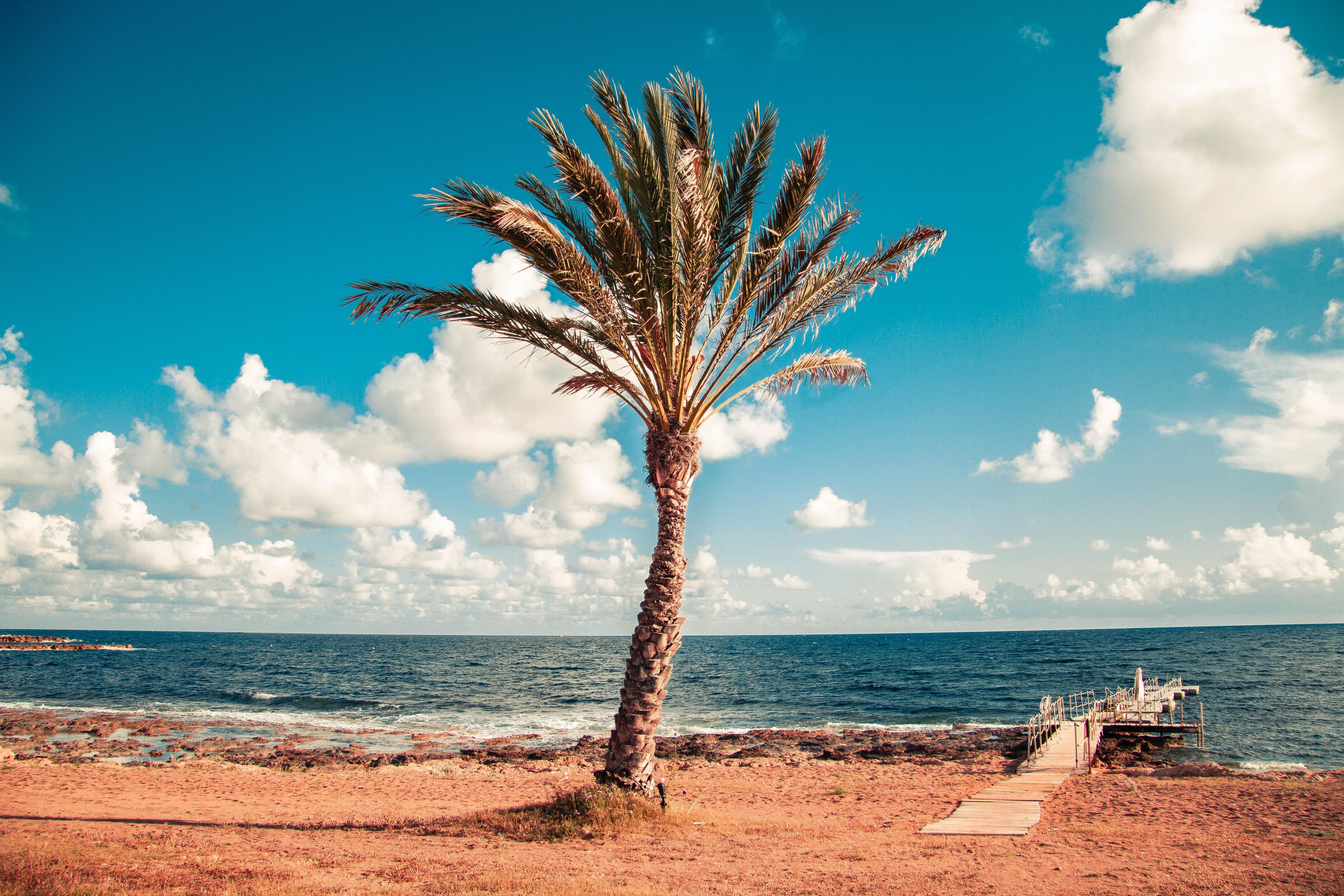 кіпр пальма на пляжі