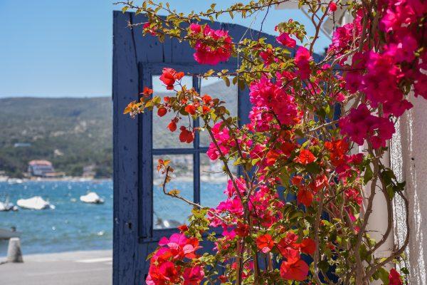 Іспанія Коста-Брава квіти