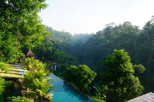 убуд басейн в джунглях