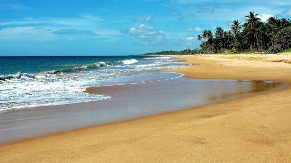 Пальмові дерева Індійського океану