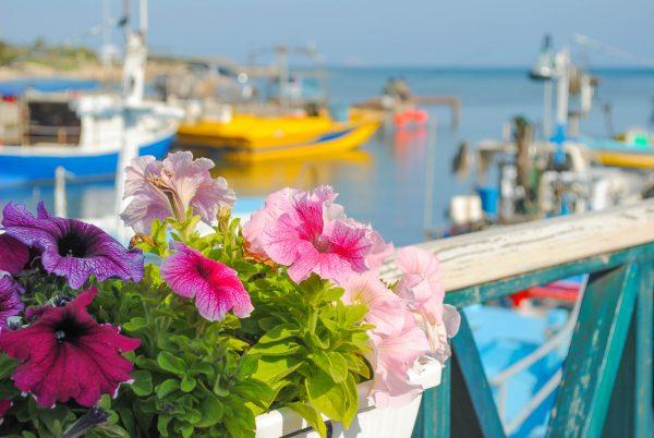Кіпр гавань квіти