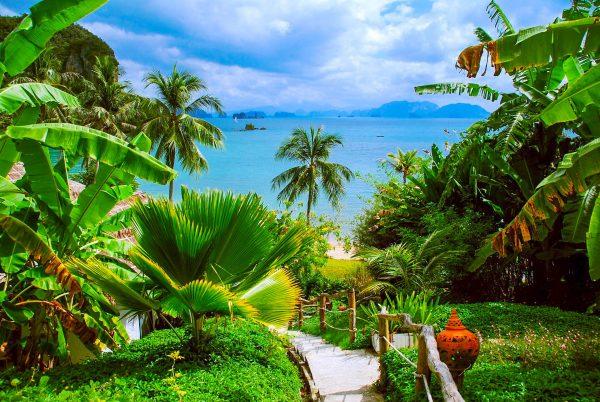 Таїланд пальми