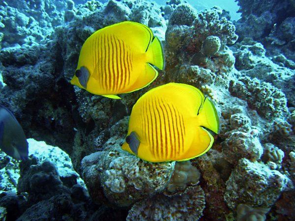 Єгипет Червоне море рибки