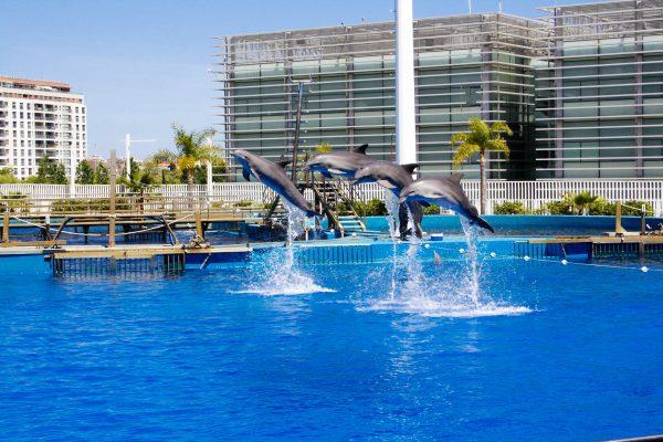 Іспанія Валенсія дельфінарій