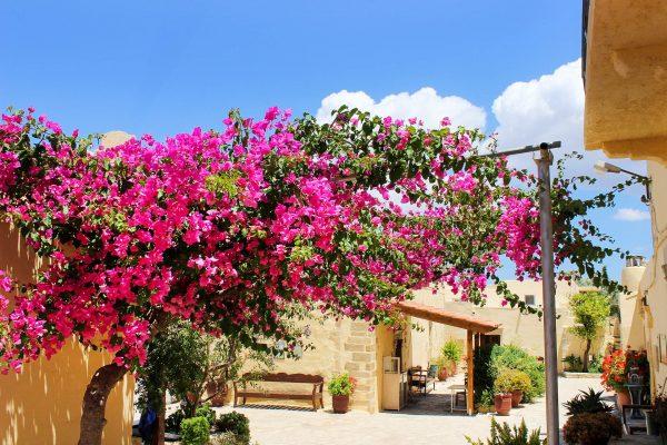 Греція Крит квіти