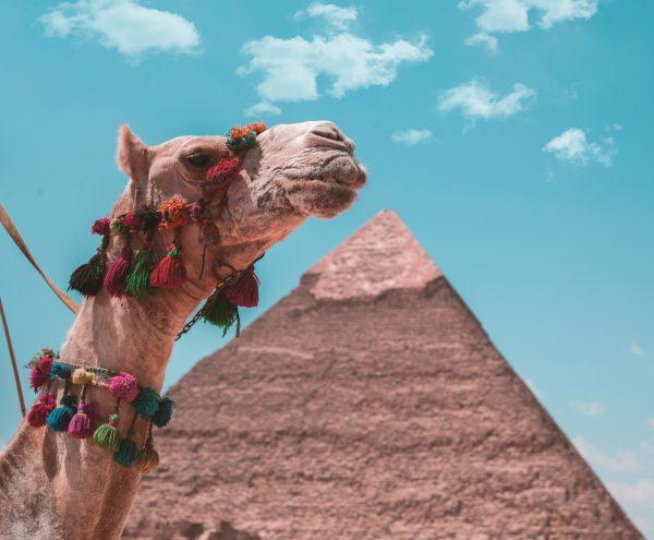піраміда верблюд