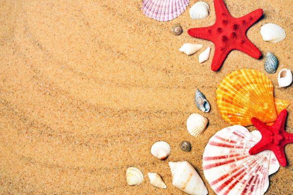 Море пляж мушлі