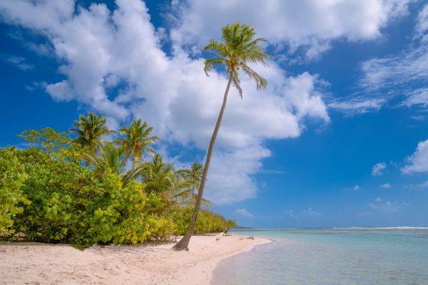 кариби пальма пляж