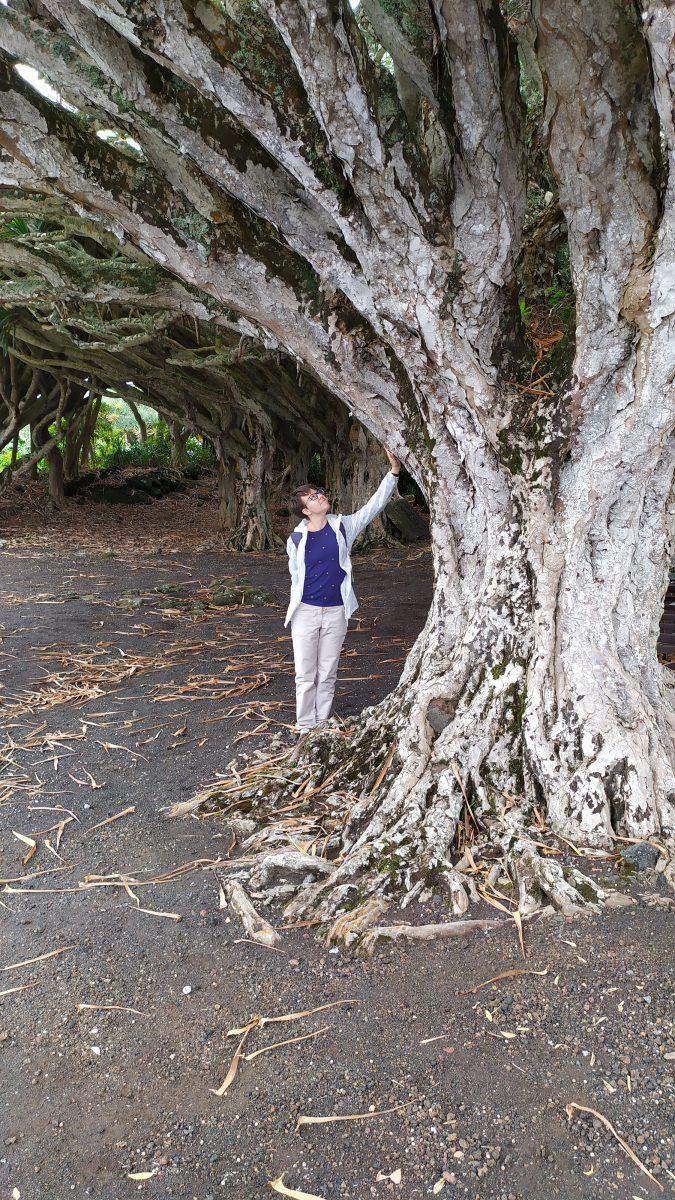 дерева на азорських островах