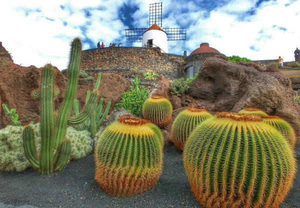 лансароте сад кактусів