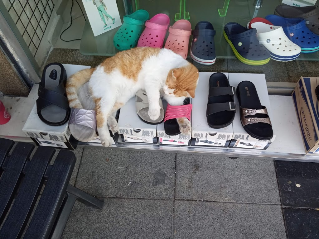 туреччина кіт