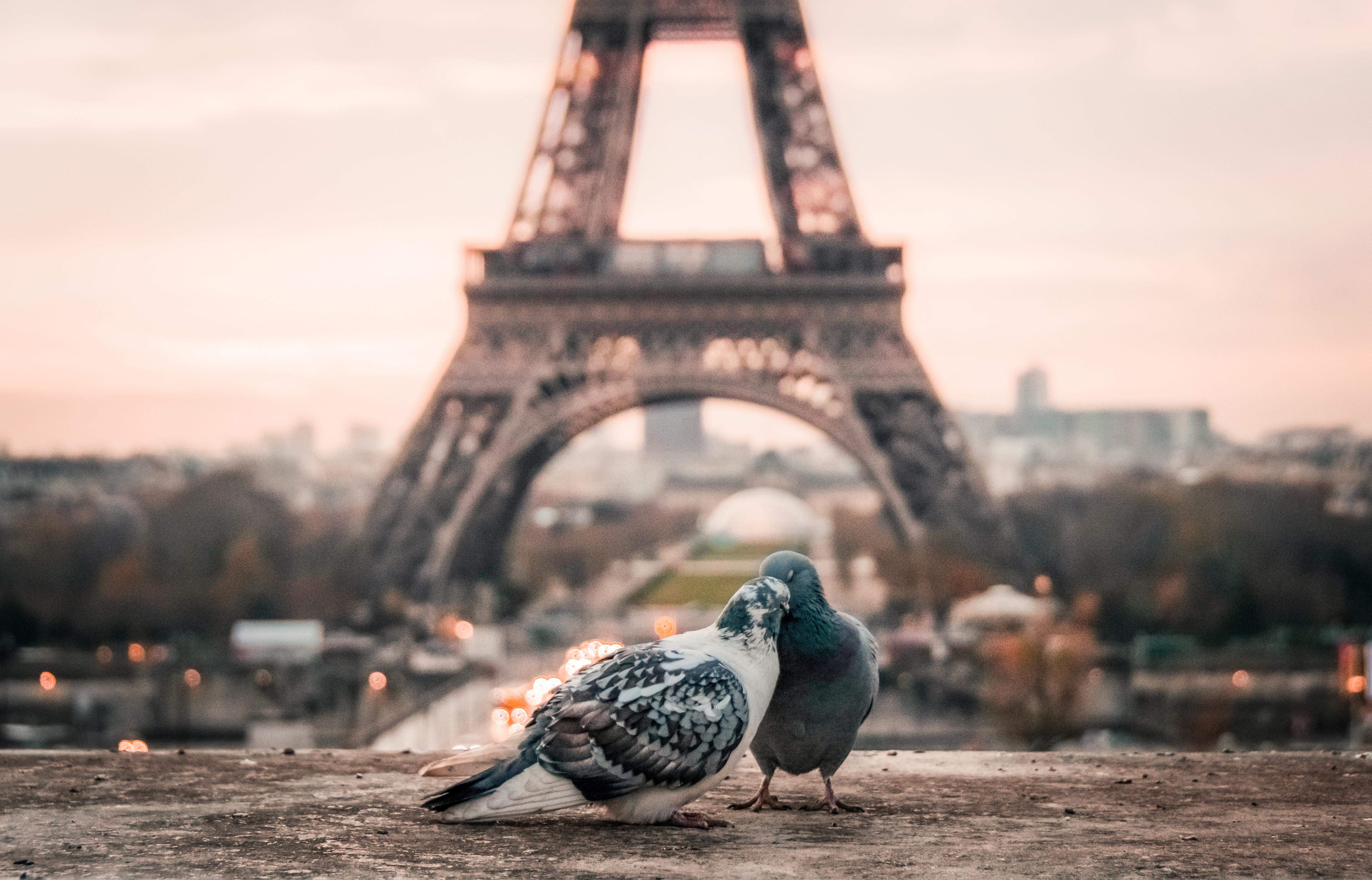париж ейфелева вежа