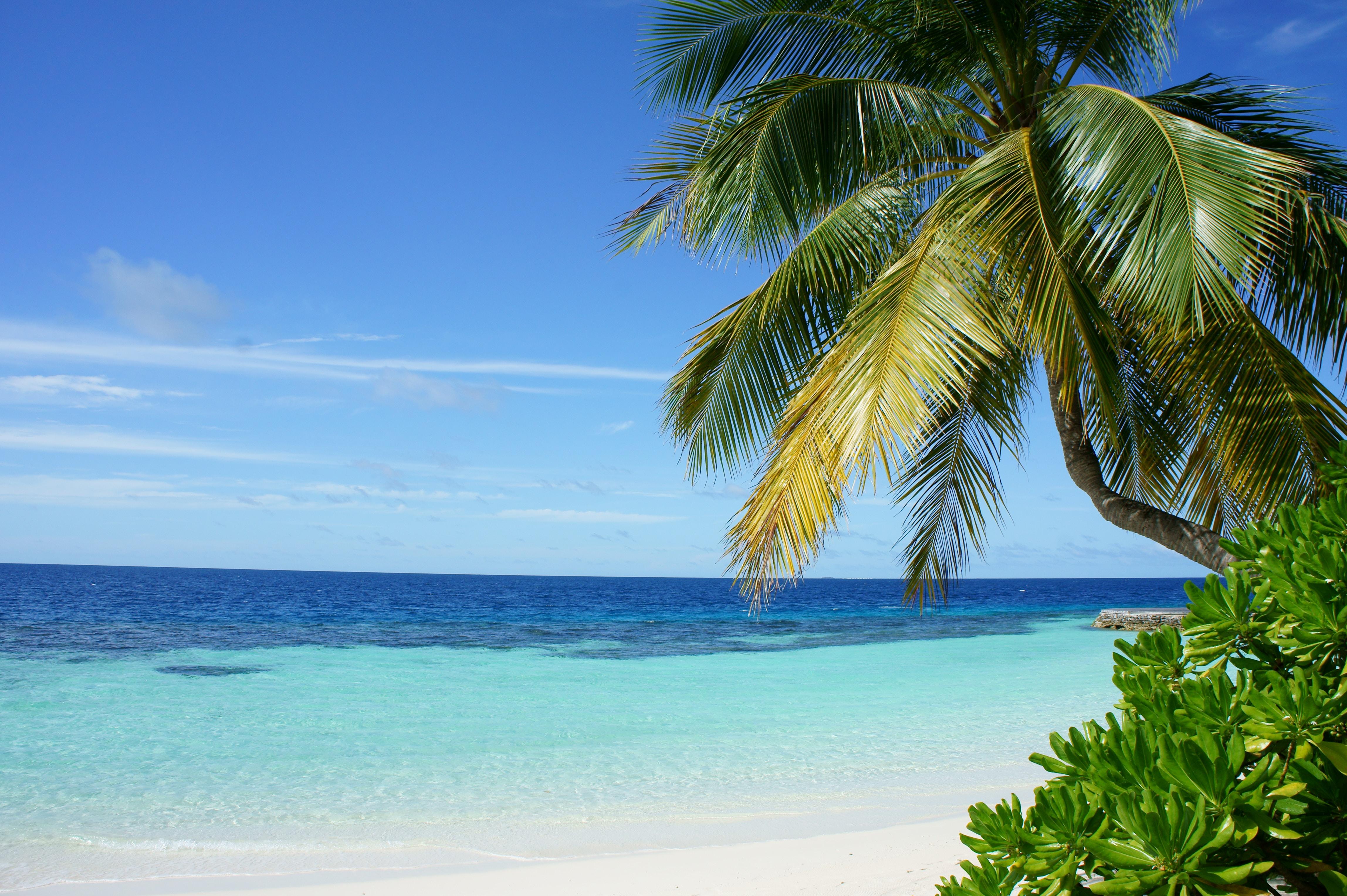 Мальдіви море берег