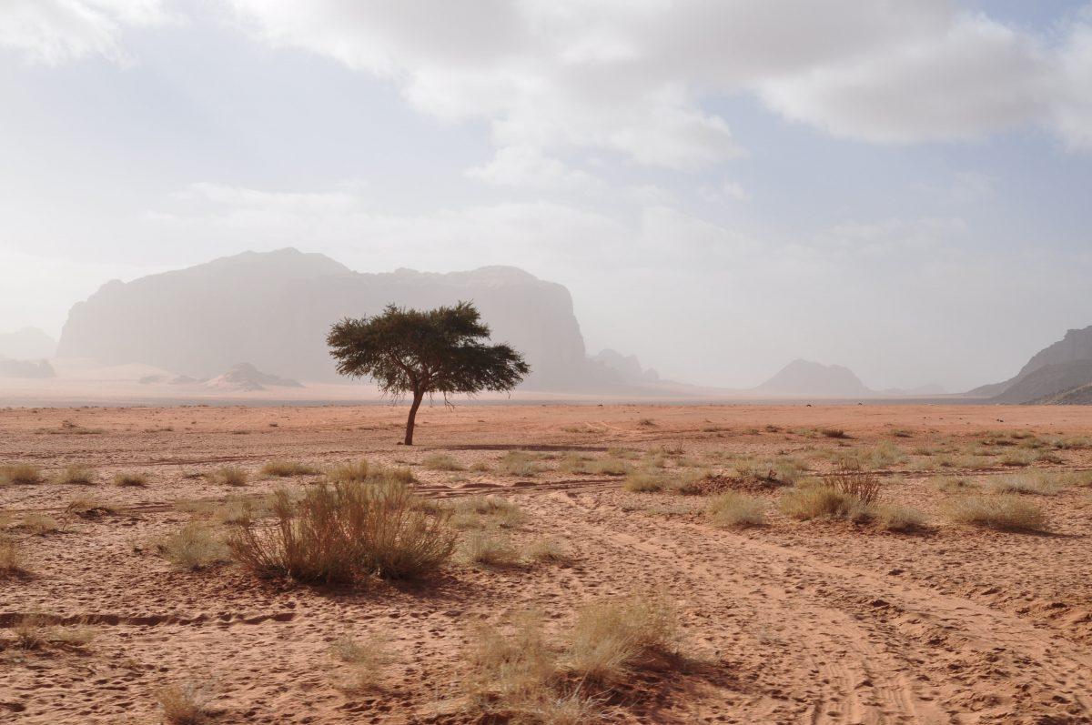 пустелі Йорданії