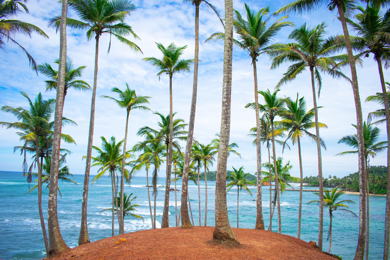 шра-ланка пальми