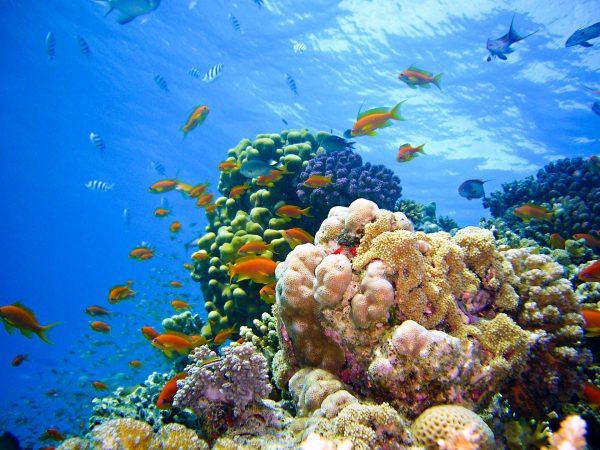 Єгипет кораловий риф
