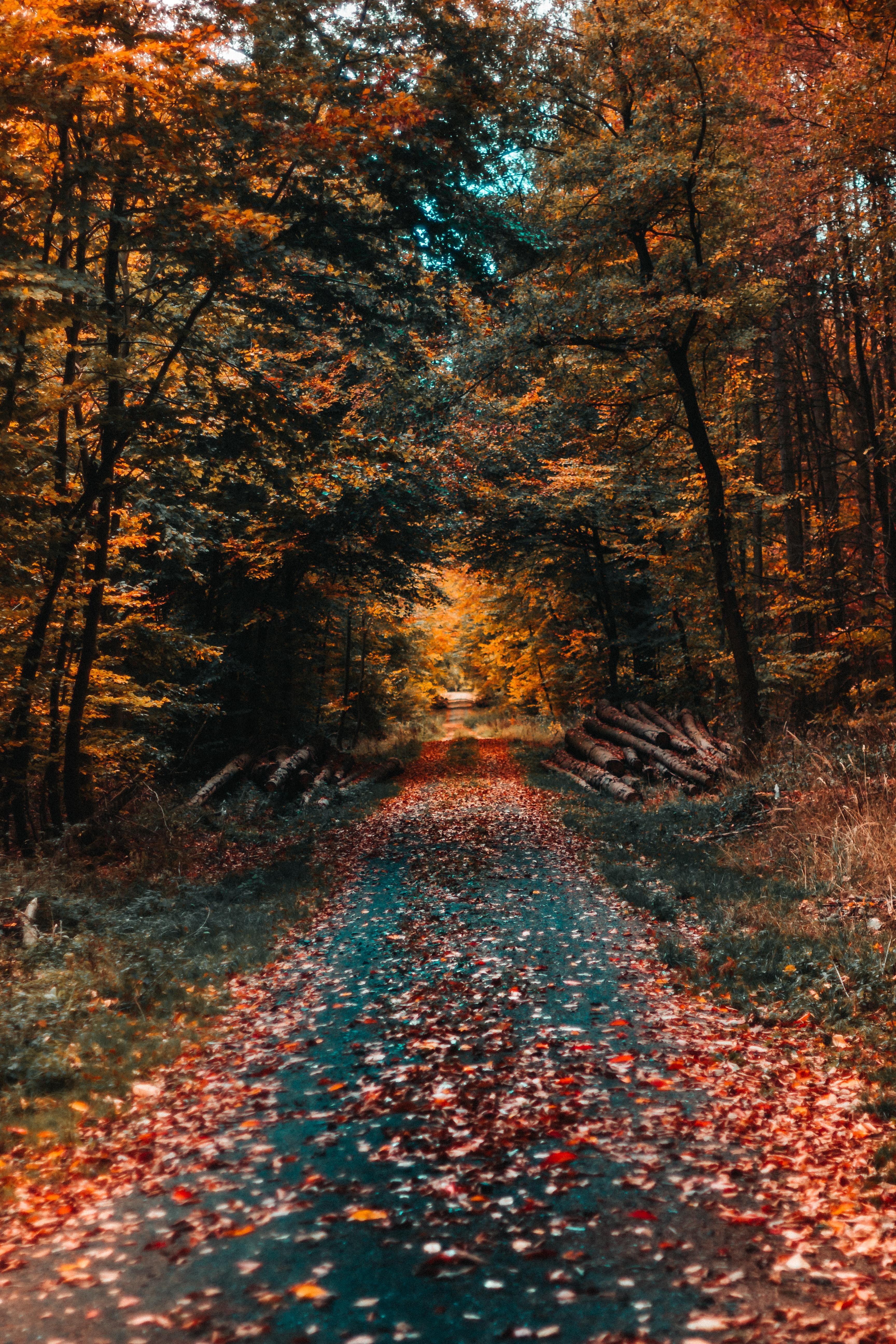 Німеччина Баварія ліс