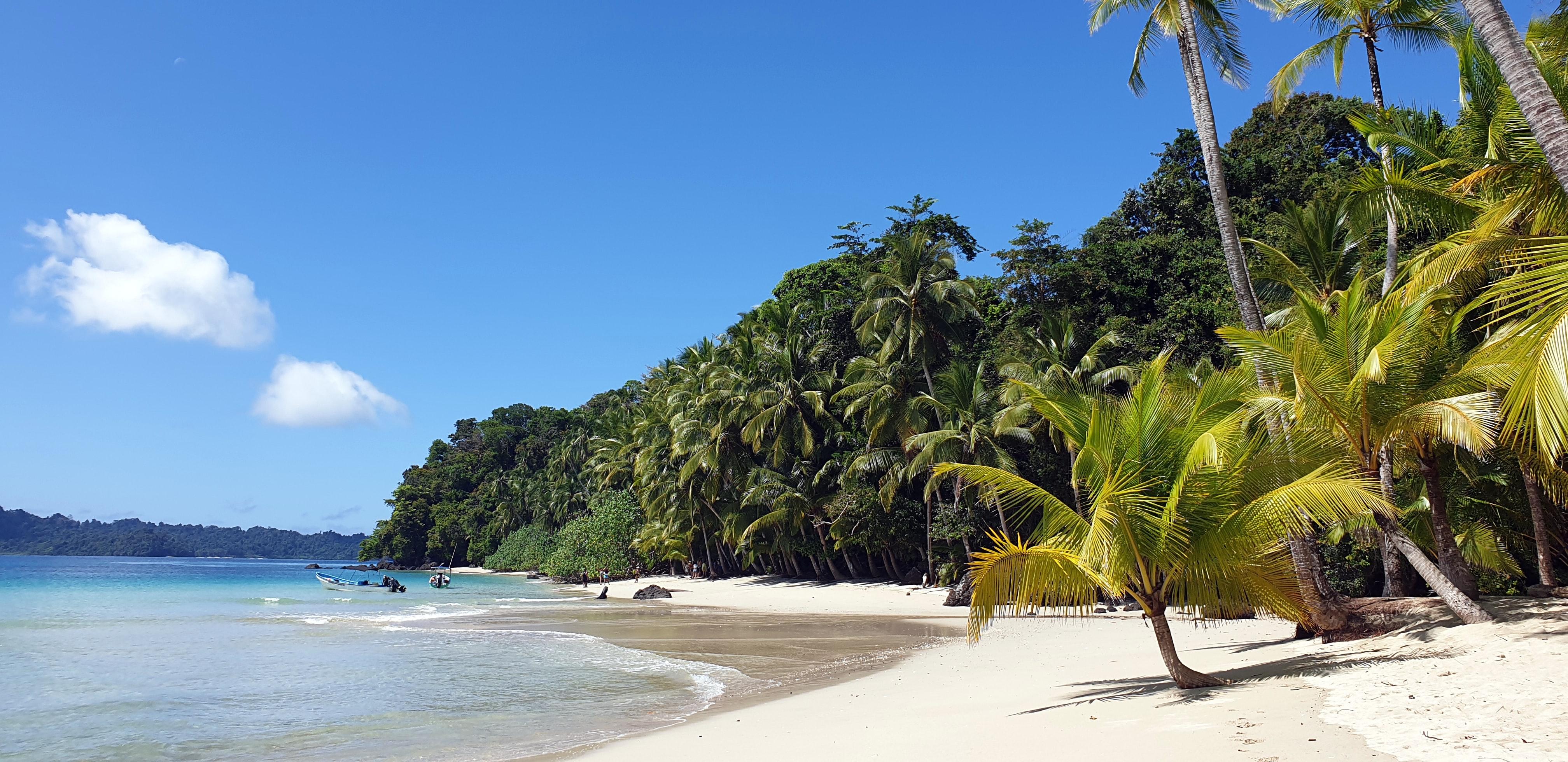 Панама Коїба