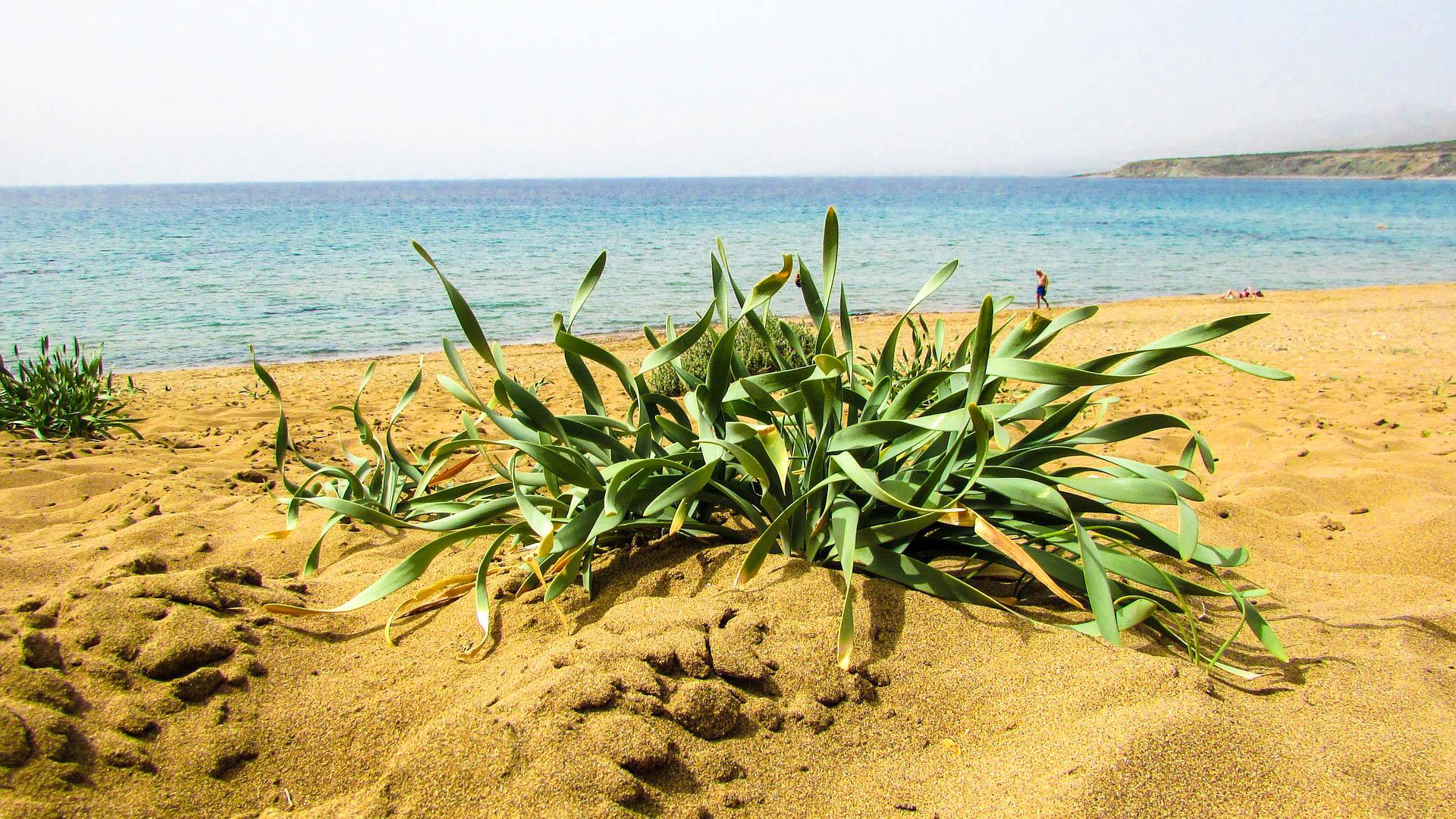 Кіпр Акамас
