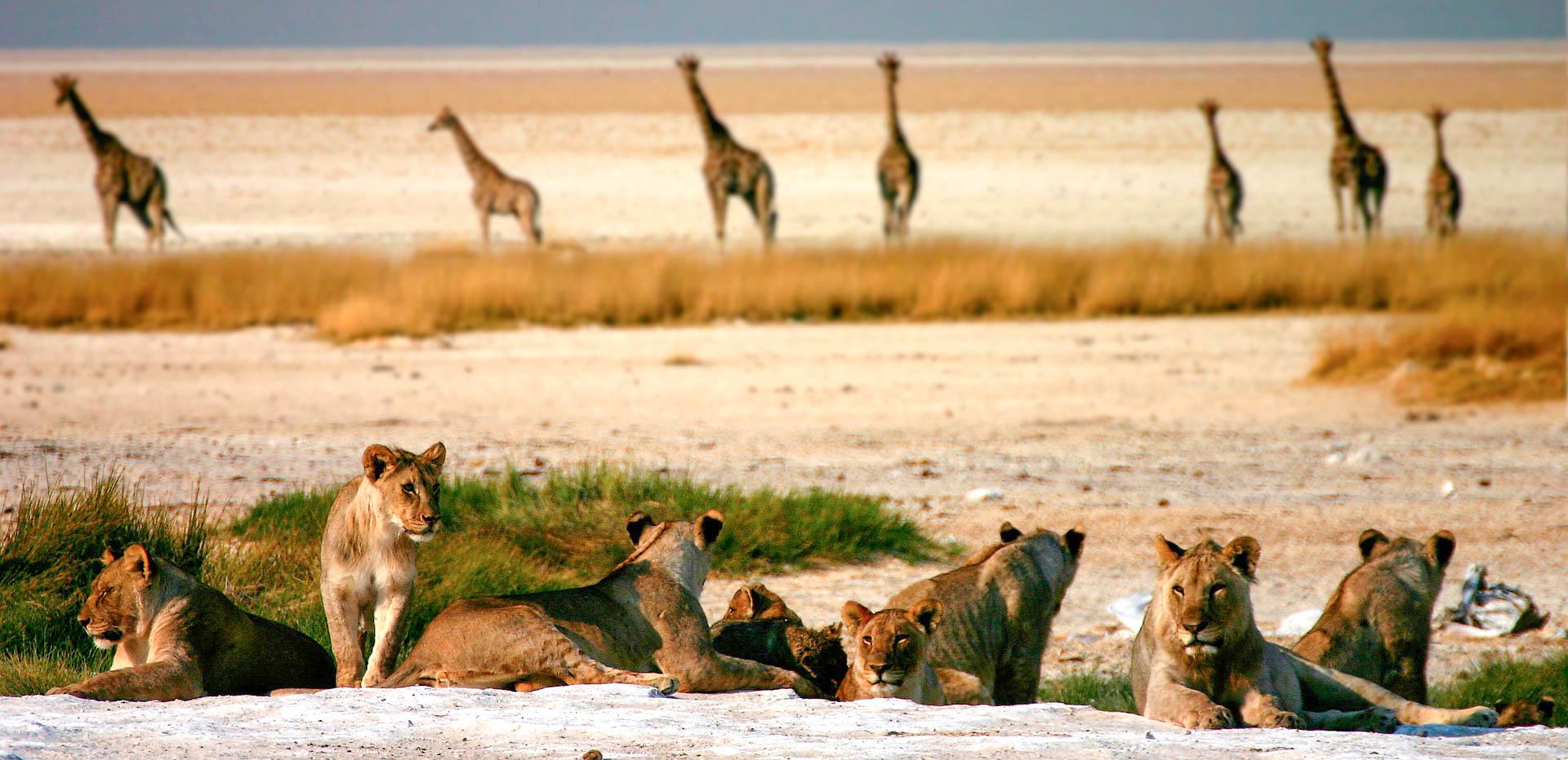 Національний парк Намібія Етоша