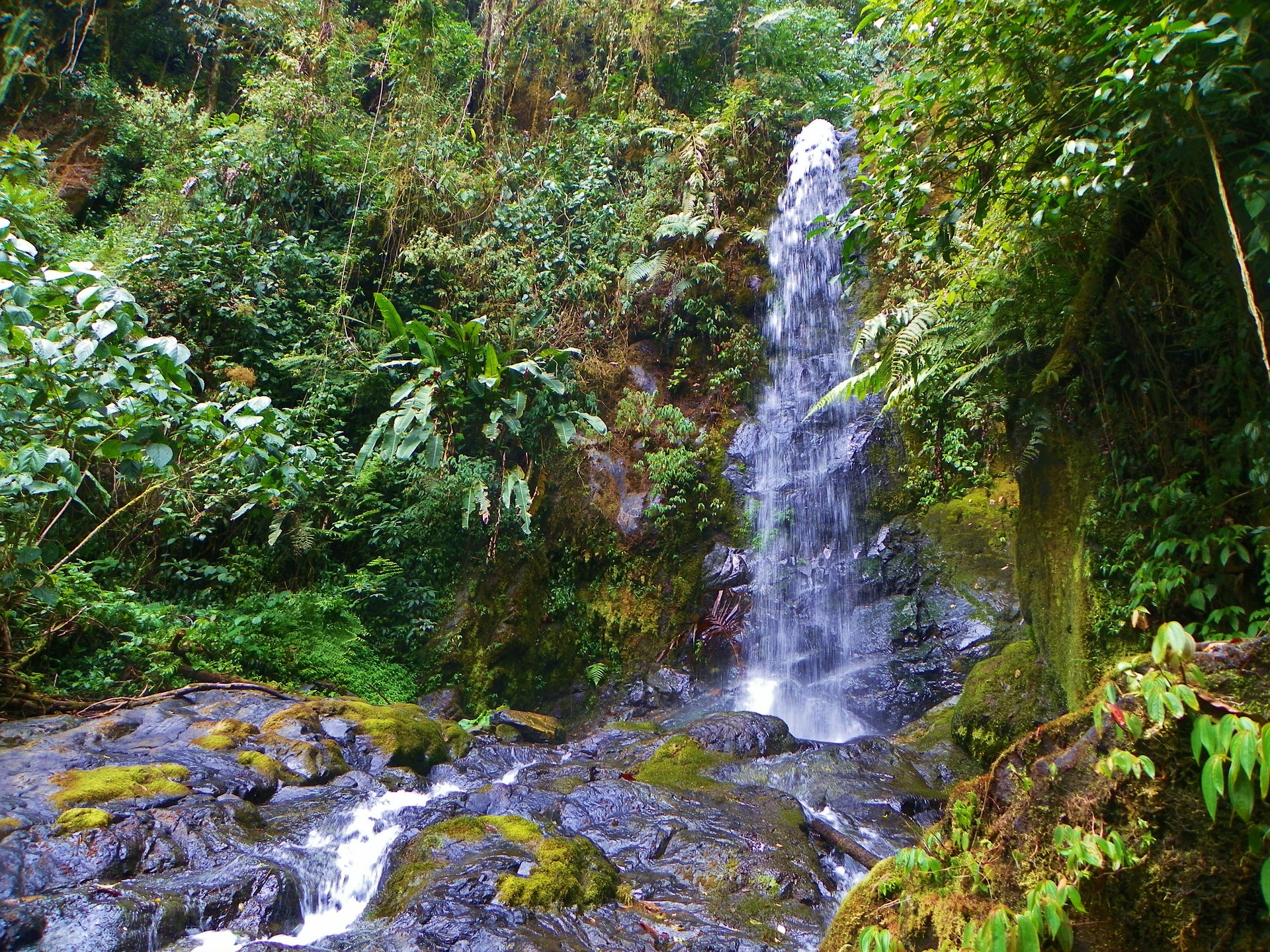 Панама Parque Internacional La Amistad
