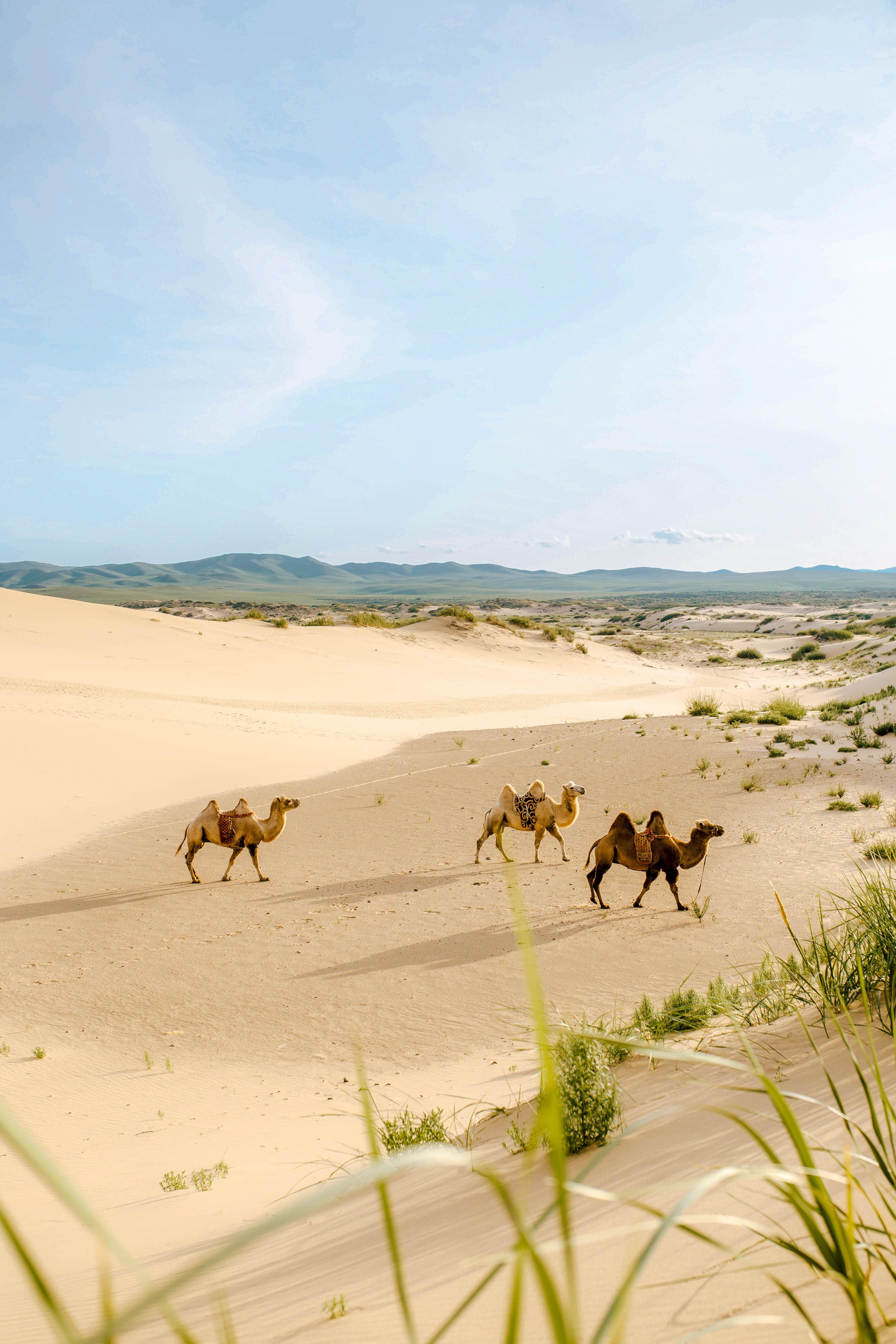 Монголія пустеля Гобі