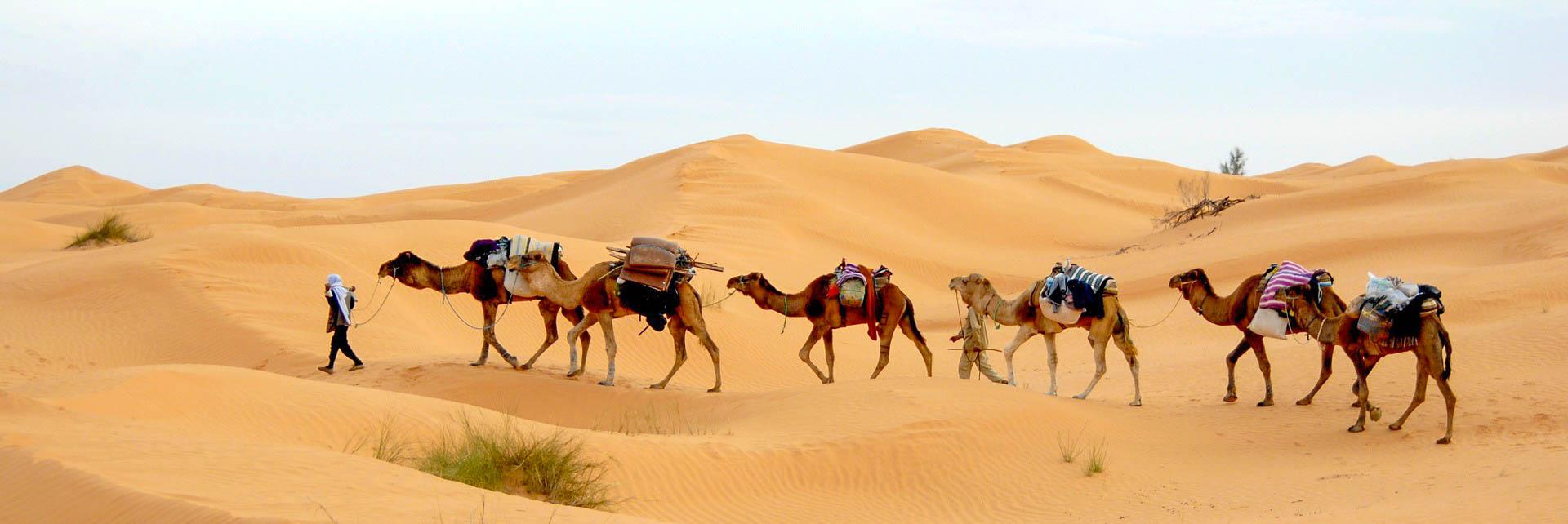 Туніс Сахара