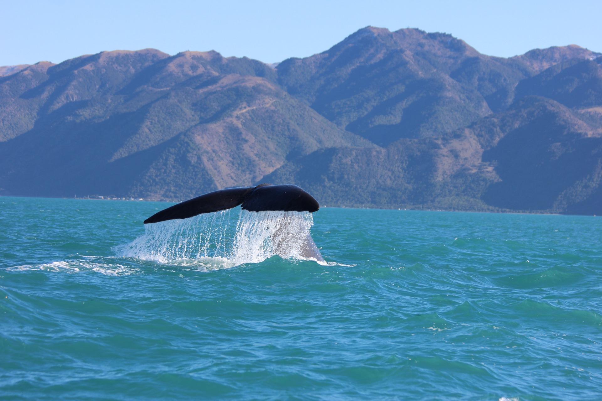 Нова Зеландія Каїкура