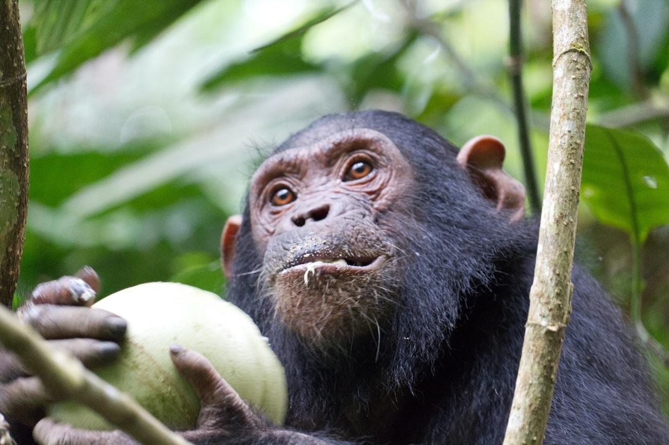 Танзанія Махале-Маунтінз