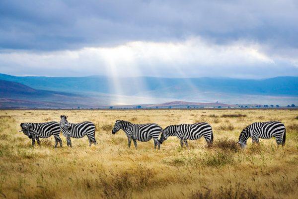 Танзанія Нґоронґоро