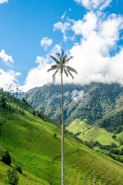 Колумбія долина Кокора