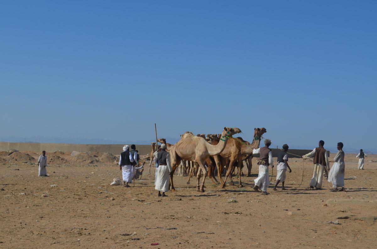 Верблюдячий базар. Шалатін, Єгипет.