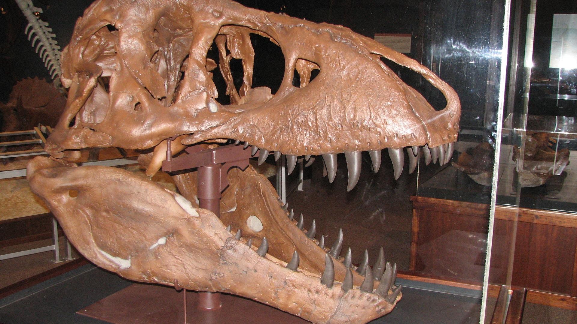 США Монтана динозавр