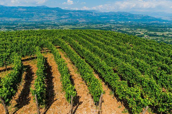 Eco Winery Lipovac Apartments