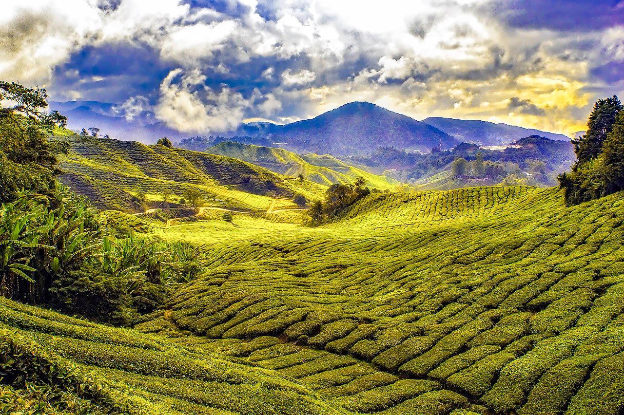 Малайзія Камерон-Хайлендс