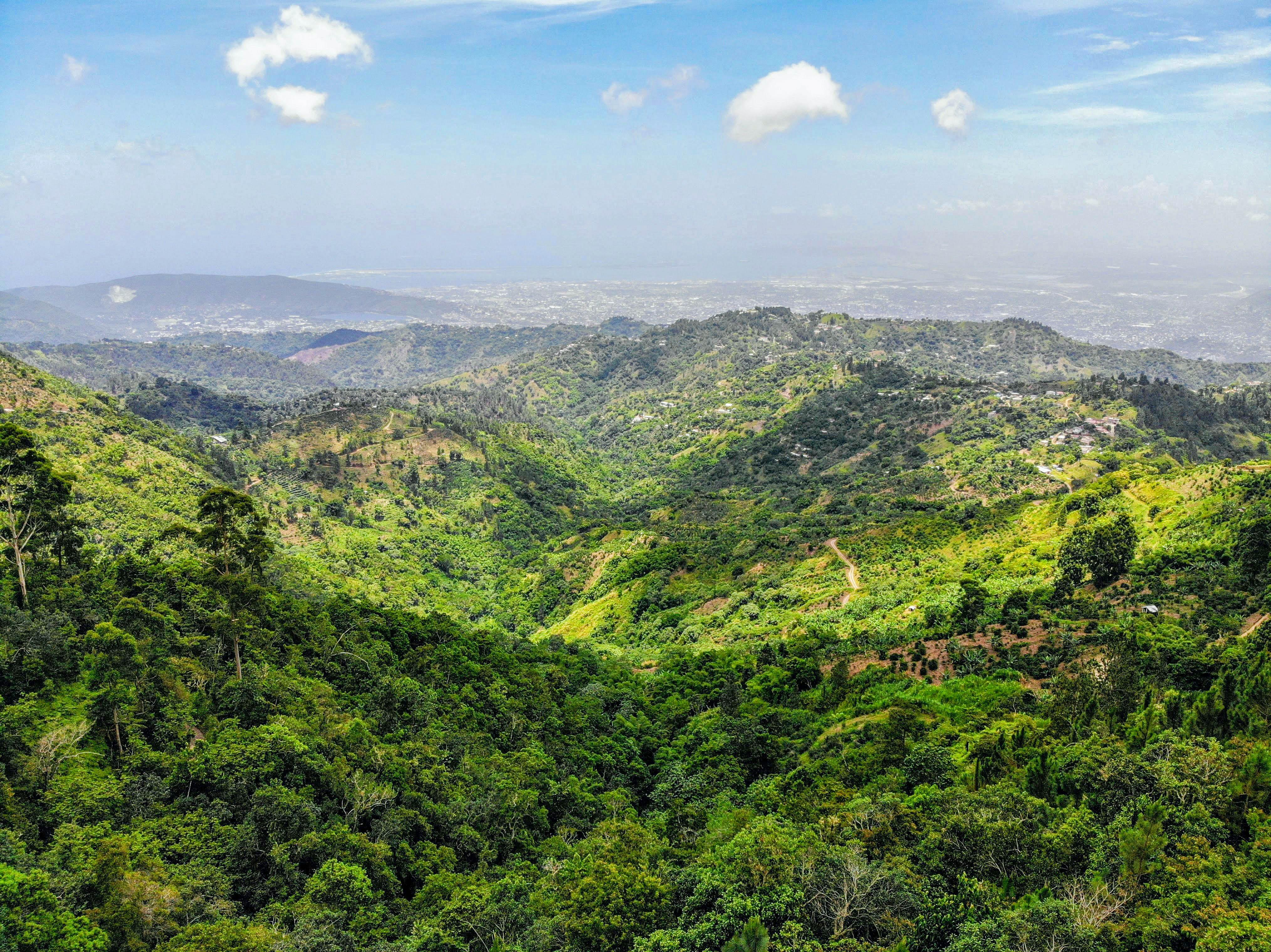 Ямайка Блу-Маунтін