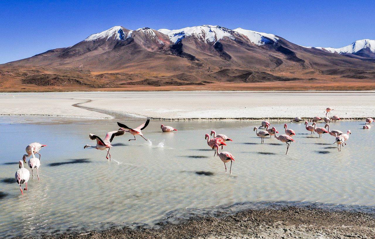 Болівія лагуна Колорадо