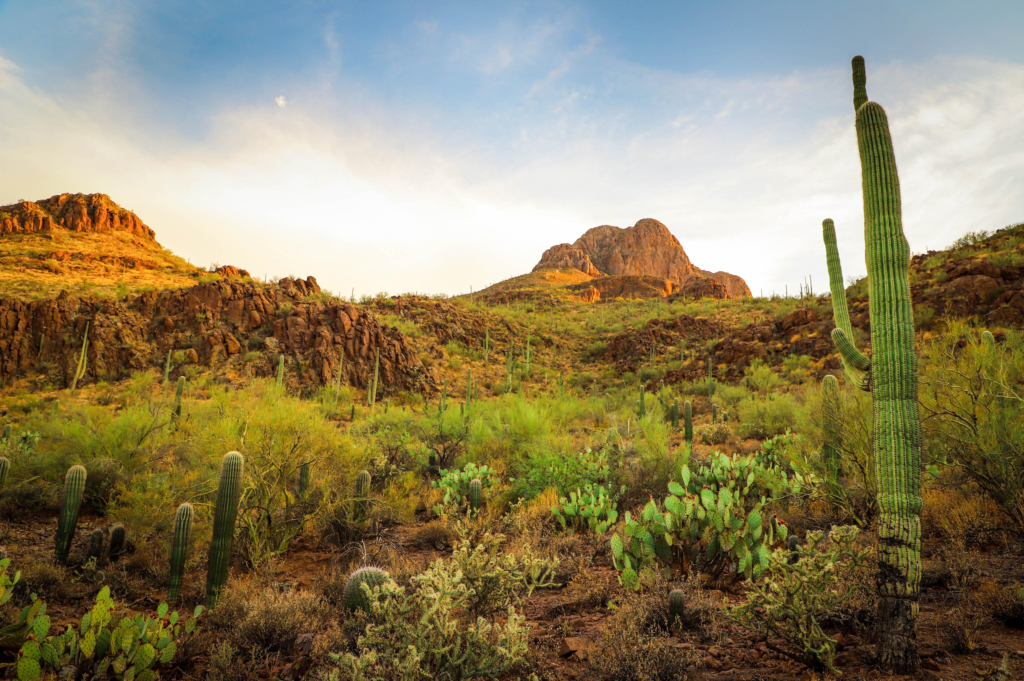 США Аризона Тусон